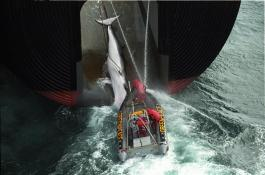 Whaling Expedition (Southern Ocean - 1999)
