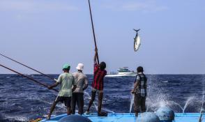 Line and pole fishing in the Maldives