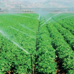 Water irrigating agricultural crops